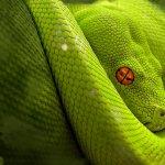 Why Python becomes popular
