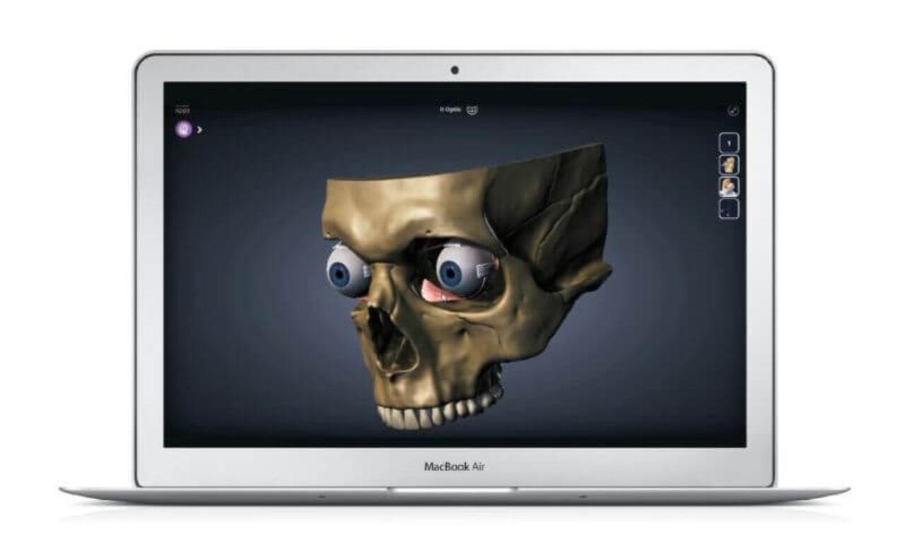 AnatomyNext - skull