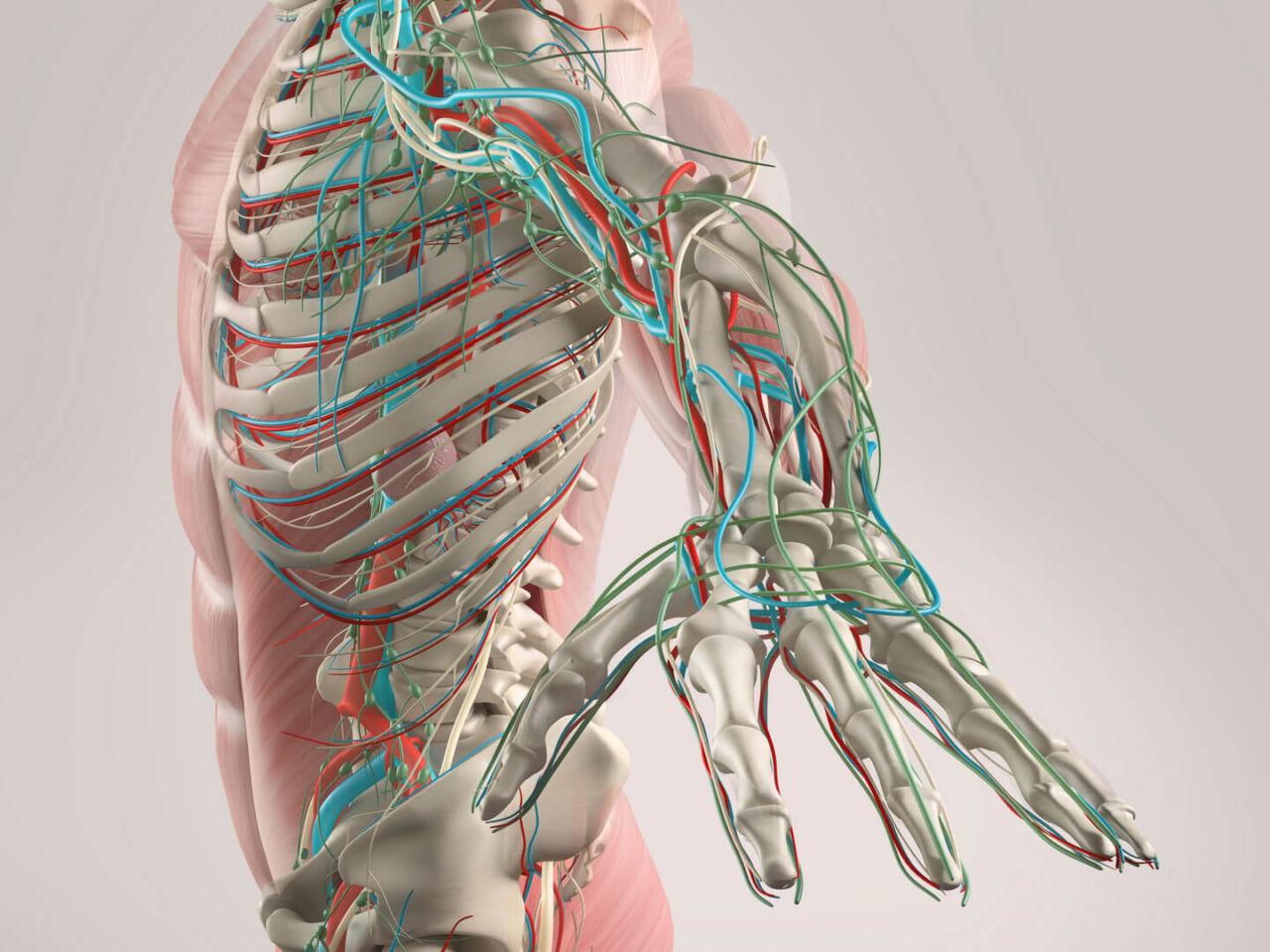 Ar circulatory system